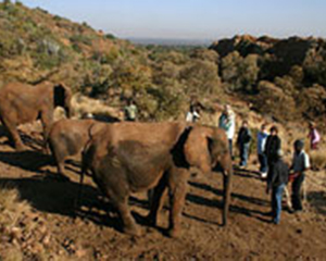 Elephant-sanctuary