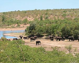Kruger-park